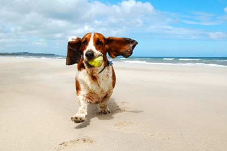dogs_play_007_81528552238.jpg